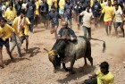 2 Dead, 80 Injured During Jallikattu Event In Tamil Nadu