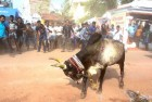 Jallikattu: Centre Looking for 'Permanent' Solution, Says Anil Madhav Dave