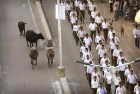 HC Directs Raj Govt to Install Scanners At Highway Toll Plazas to Check Cattle Smuggling