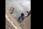 Watch: Delhi College Guard Brutally Beats Street Dog To Death, Case Registered After Video Goes Viral