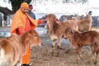 Only Slogans Will Not Protect Cows, Honest Efforts Needed: Adityanath