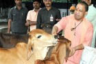 UP Govt Mulling to Introduce Sweets Made of Cow-Milk as 'Prasad'