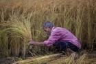 Farmers Can Now Insure Rabi Crops Till January 10