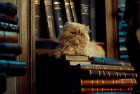 US City Council Votes to Evict Cat From Public Library