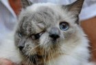 World's Oldest Two-Faced Cat Frank & Louie Dies at 15