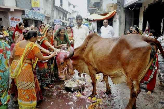 New animal market rules ban sale of cattle for slaughter