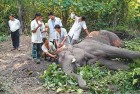 Drought: Elephant Dies of Suspected Dehydration in Coimbatore