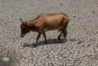 2016 on Track to be Hottest Year Ever: UN