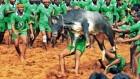 Jallikattu: 36 People Injured During The Event In Madurai