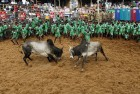 Jallikattu Held In Alanganallur, 47 Sportsmen Suffer Injuries