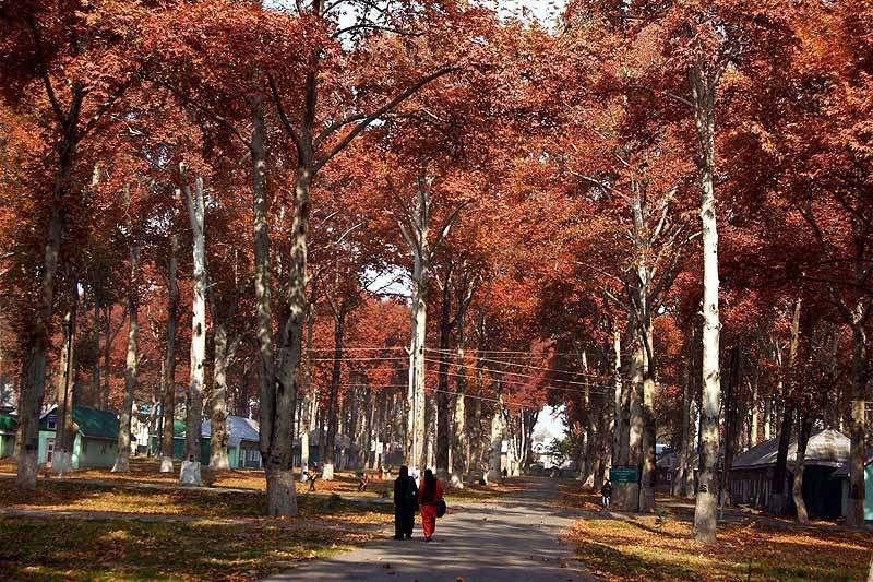 Trees Save More Than 850 Human Lives Per Year in US: Report
