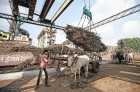 CCEA Okays Rs 6,000-Cr Interest-Free Loan to Sugar Mills
