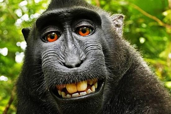Monkey's Selfie Sparks Copyright Row
