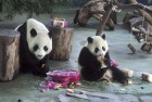 Ever Wondered Why Pandas Are Black And White?