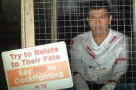 In PETA Ad Campaign, Bopanna Urges Fans to Shun Cockfighting