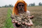Govt Slaps 10% Import Duty on Wheat, Tur Dal