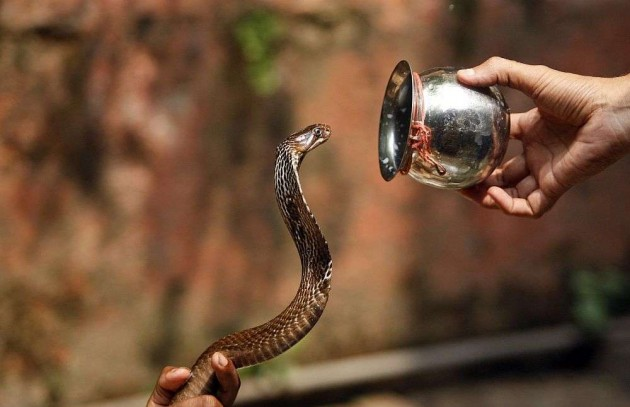 Hyderabad Girl Terrorised With a Snake, Raped and Filmed
