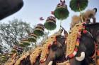 Pamela Anderson Asks CM Not to Use Elephants for Kerala Festival