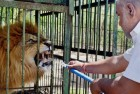 Zoo Animals Get Mutton, Chicken After Buffalo Meat Shortage In Uttar Pradesh