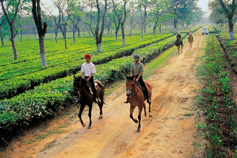 Guests take a horseback tour at the Mancotta Tea Estate, Assam