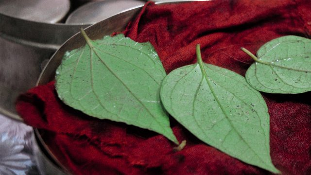 Paan featured image