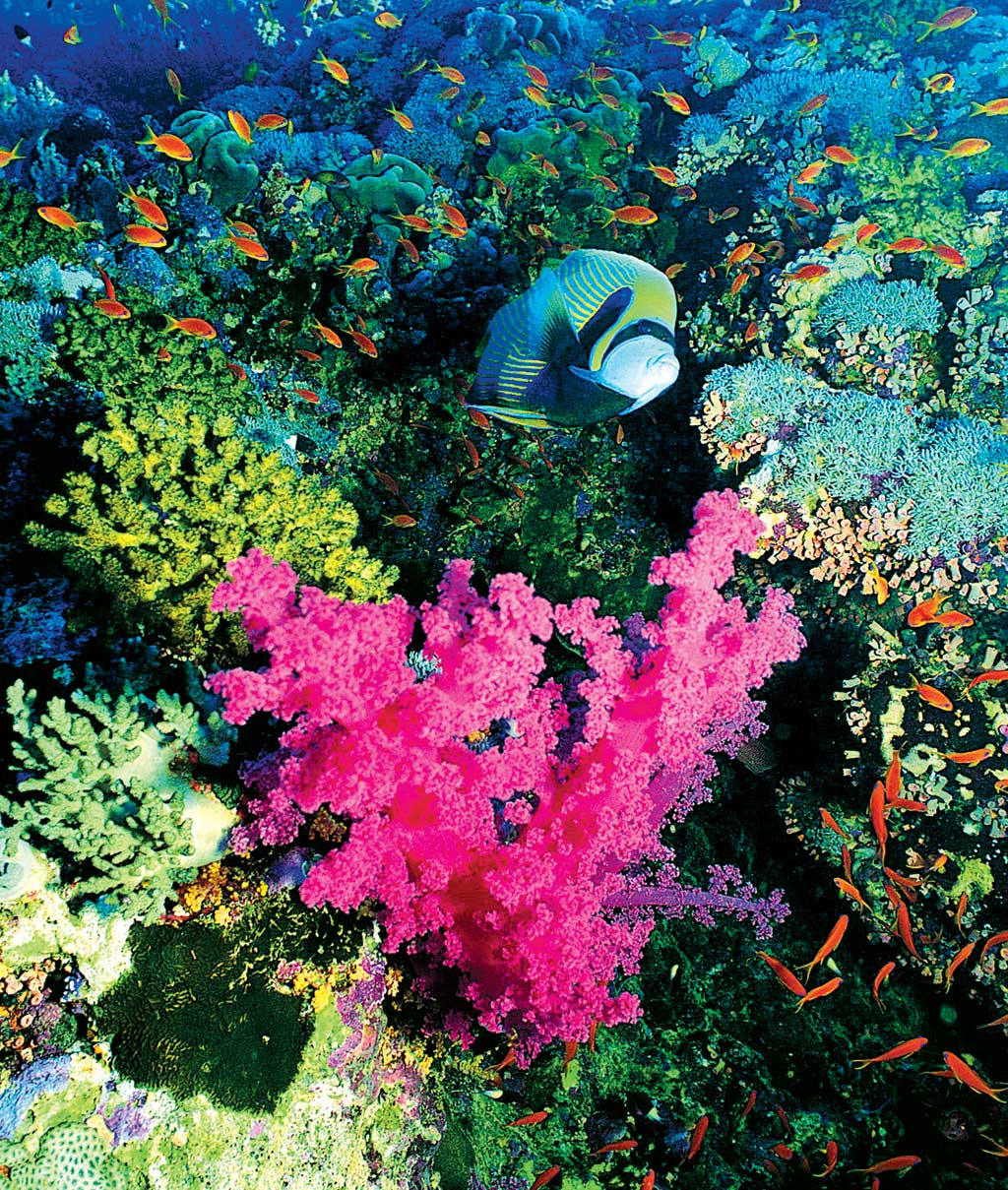 Extraordinarily colorful underwater world in the Andaman Sea