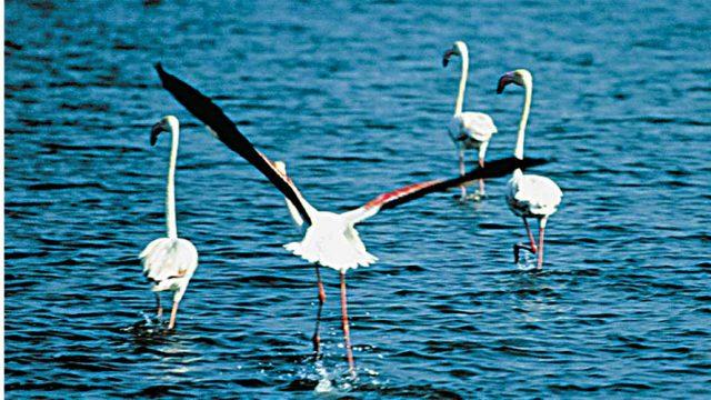 Numerous birds including flamingoes inhabit the lake