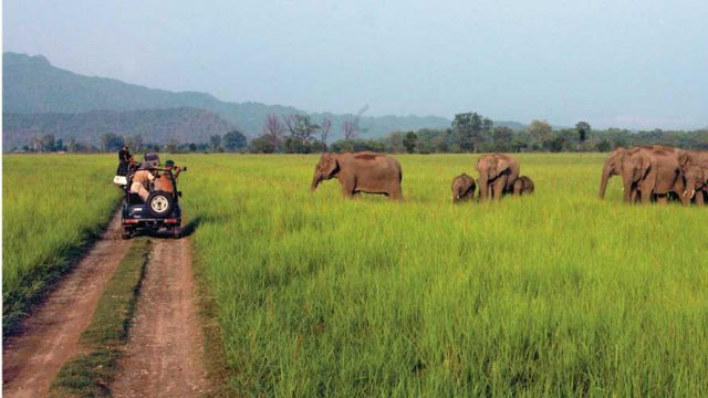 Visitors photographing wild elephants at Corbett National Park