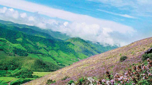 The beautiful Nilgiri Hills, home to the Eravikulam NP