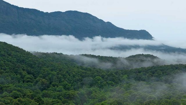 Clouds wafting over the densely forested Silent Valley National Park