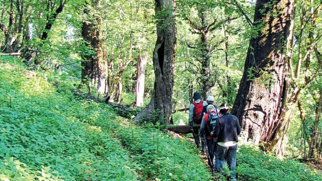 Trekkers in the Great Himalayan NP