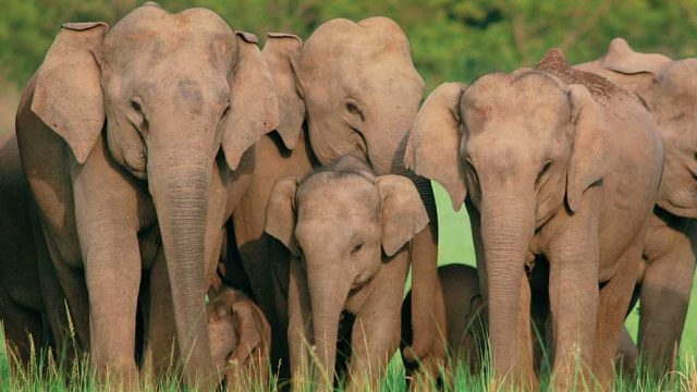 Famous for tigers, Corbett also promises sightings of wild elephants
