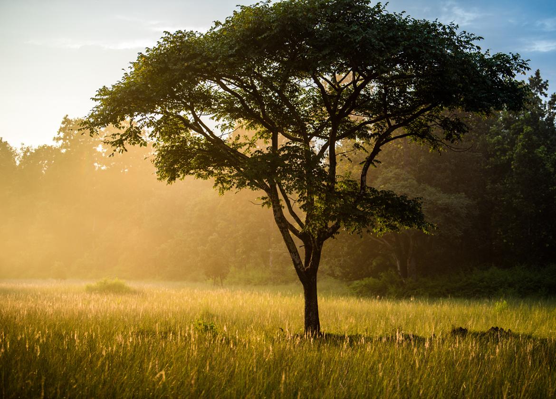 Sunlight shines through the open grasslands of Kanha Tiger Reserve.