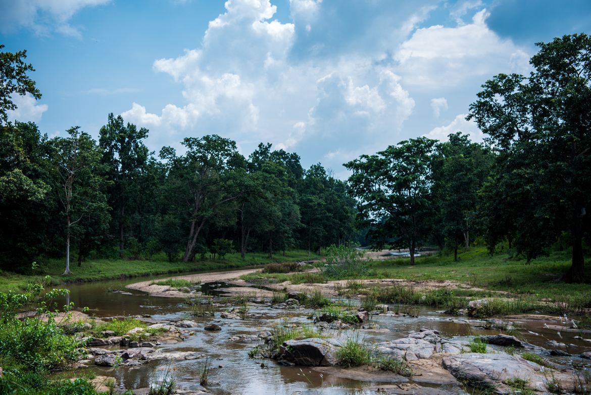 A small stream flowing through Kanha Tiger Reserve.