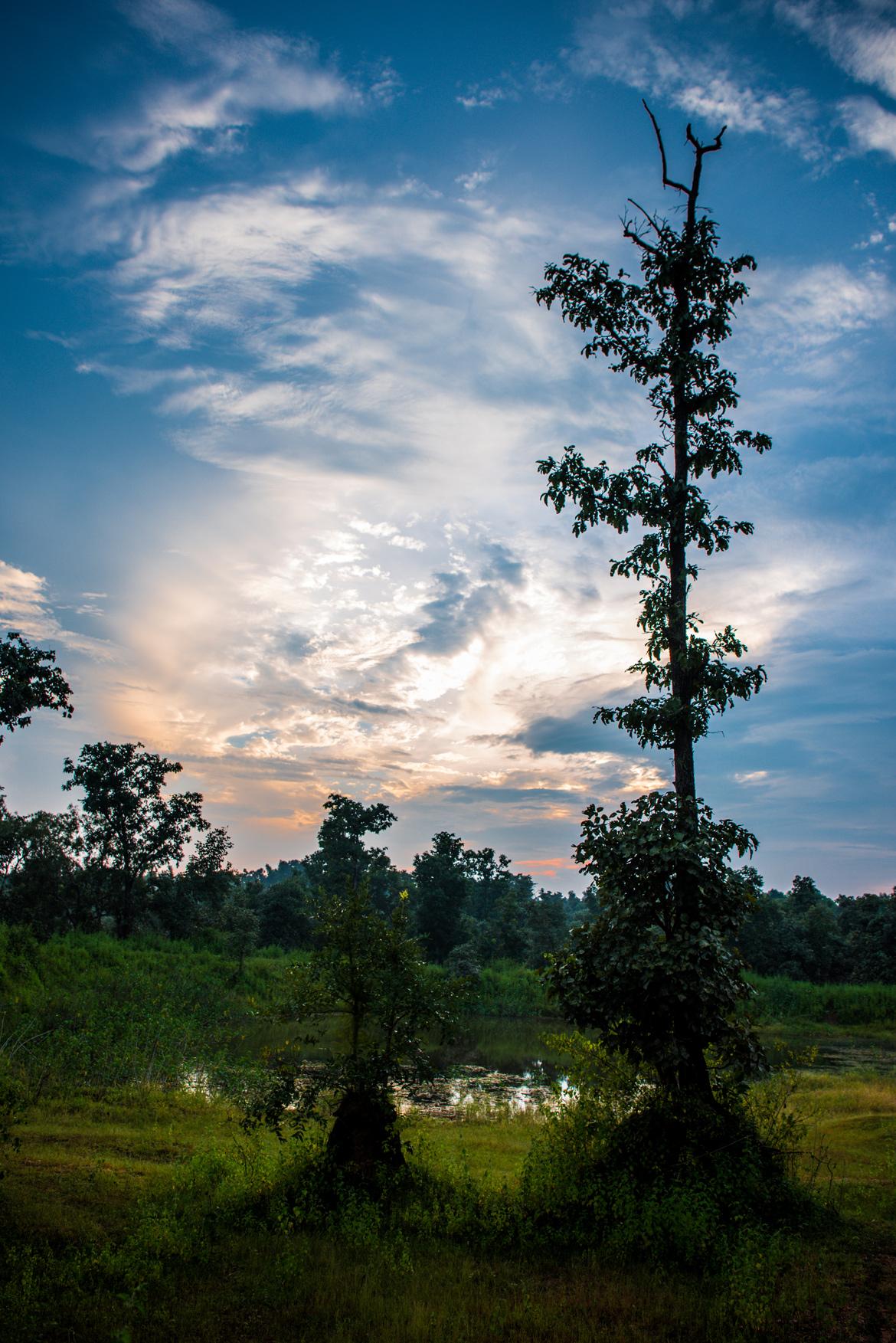 Dramatic sky after a short rain shower at Kanha National Park.