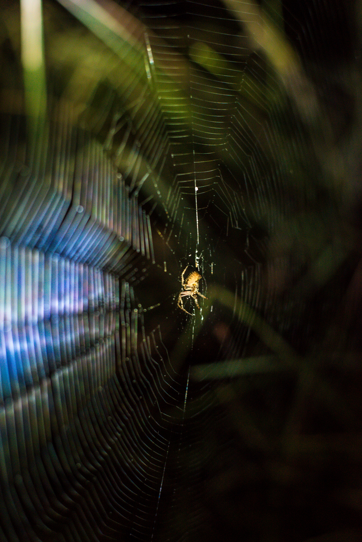 Spiders build a variety of different webs to trap their prey.