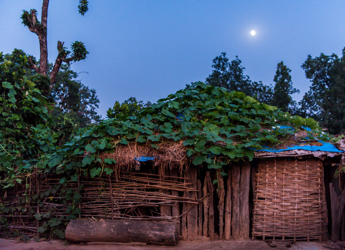 At Mardhari village in the buffer zone of Bandhavgarh National Park, vegetables like pumpkin are grown on the roofs of homes and cattle sheds.