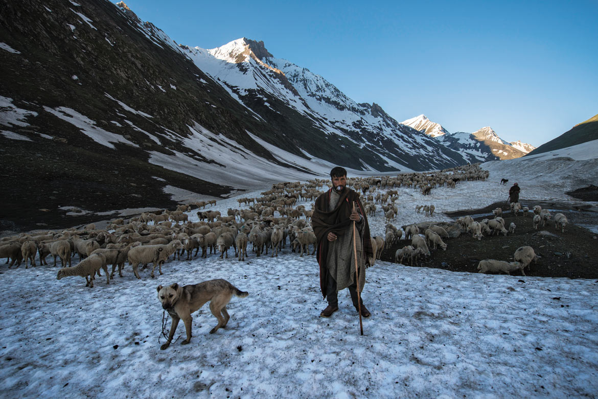 As spring creeps in, the Bakarwals begin their day's journey early. Snow, hardened by the cold of the night, is easier to tackle for man and sheep alike