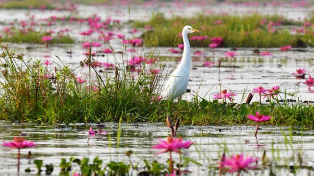 Chilika Lake is great for birding