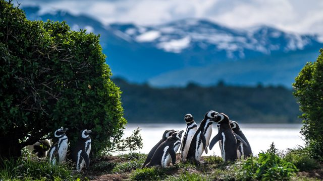 A penguin conference