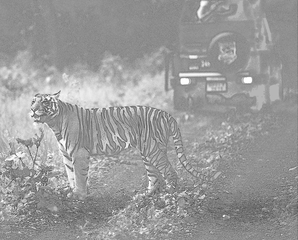 Tiger Stories
