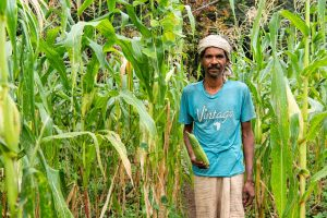 Kamal, a local, from Kareyam village passing through his corn fields