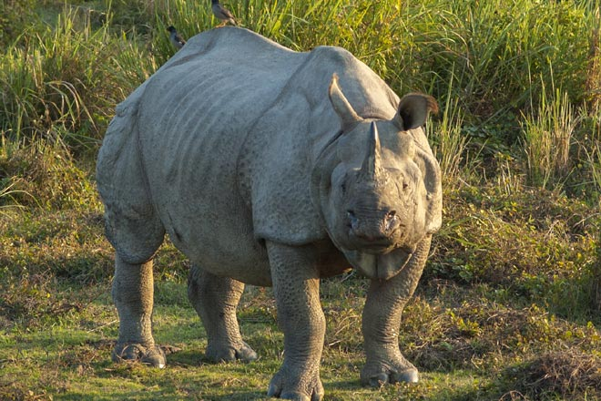 Trip to Kaziranga National Park