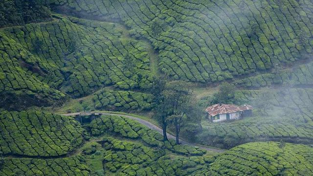 Lush green forests after a rain shower in Munnar